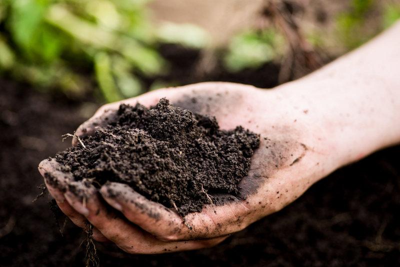 Les caractéristiques de la terre végétale