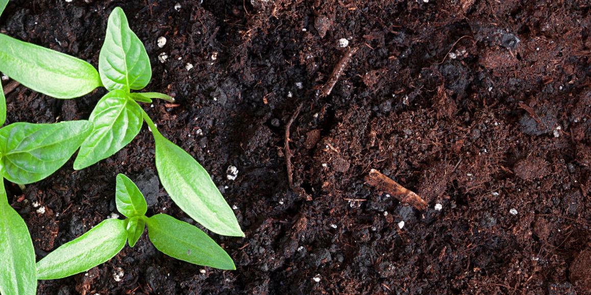 Terre végétale et compost BIO